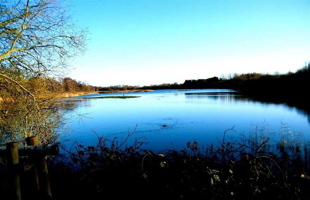 Whisby Nature Reserve by Robert Steadman