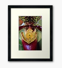Colorful Orchid Framed Print
