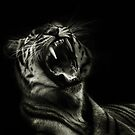 Hear Me Roar  by larry flewers