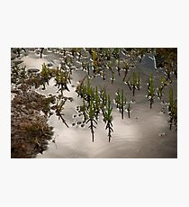Samphire at Salthouse, Norfolk. Photographic Print