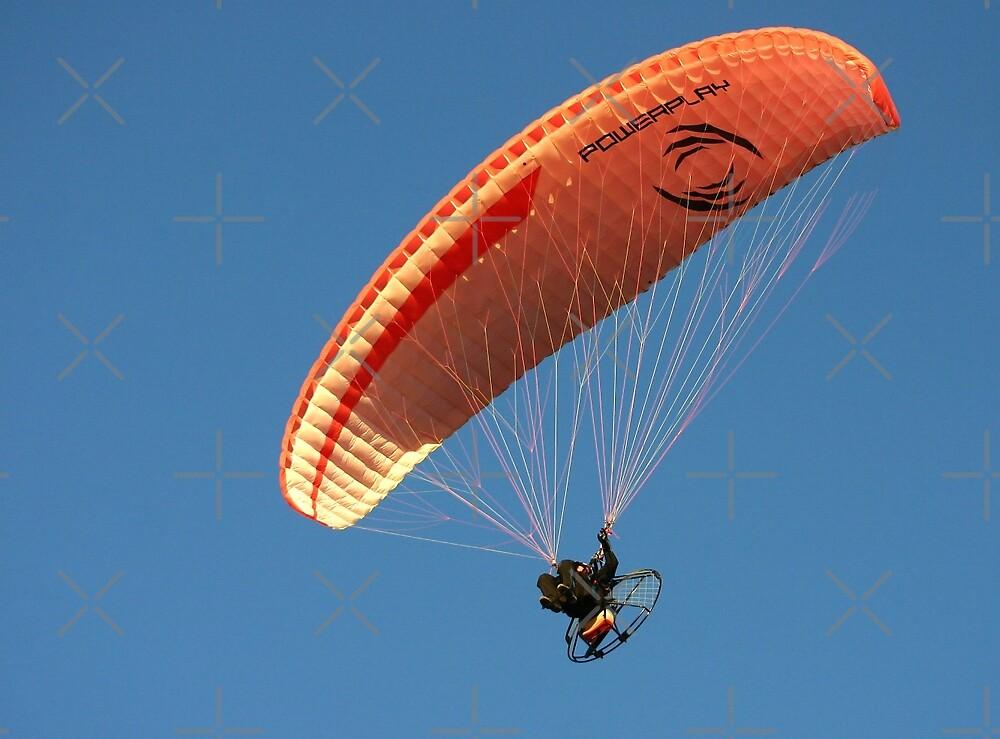 Flying High by CarolM