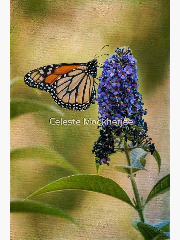 Monarch auf Schmetterlingsbusch von celestem
