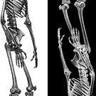 Skelestripe by jenithea