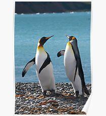 King penguin duo Poster