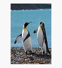 King penguin duo Photographic Print