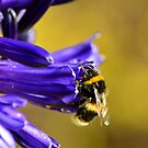 Busy Bumble Bee 3 by Glenn Bumford