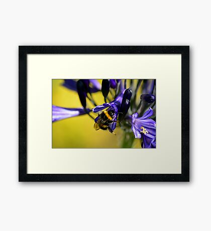 Busy Bumble Bee 4 Framed Print