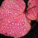 Fall by Karen Gunn