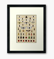 Entomology Insect studies collection  Framed Print