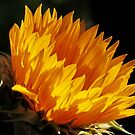 Here Comes the Sun Flower by AnnDixon