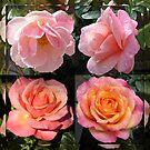 Ihre Reflexionen bewundern - Rose Beauties im gespiegelten Rahmen von BlueMoonRose