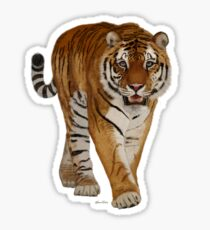Tiger - After the Storm Sticker
