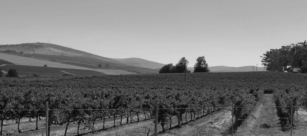 Vineyard by ARTPICS STORE