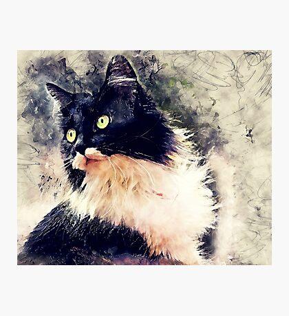 Cat Lola Photographic Print
