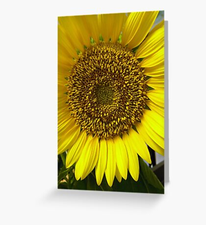To Brighten Up Your Day! Greeting Card