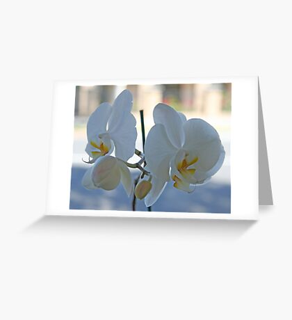 Budding orchids Greeting Card