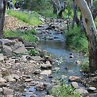 Creek and bush by sharon wingard