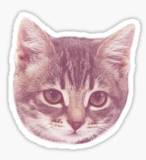 Swaggy Cute Kitten  Sticker