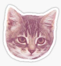 Swaggy Cute Kitten  Sticker