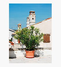 Oleander in Pican Photographic Print