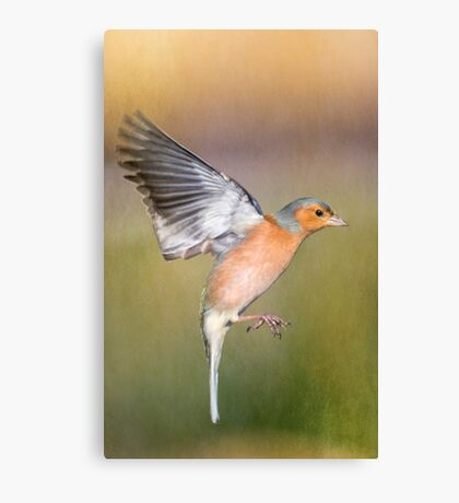 Hovering Chaffinch Canvas Print