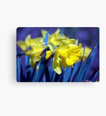Spring Flower Series 17 Canvas Print