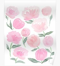 peach and blush peonies Poster