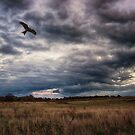 Peace in The Storm by Vicki Field