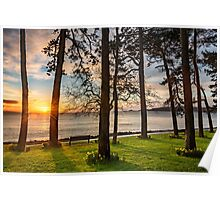 Sunrise Through The Trees Poster