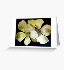 Clover Flowers Greeting Card