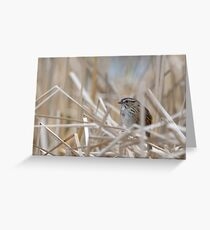 Shy Swamp Sparrow Greeting Card