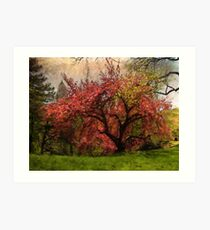 Blooming cherry blossoms in Central Park, NYC Art Print