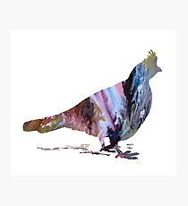 Grouse  Photographic Print