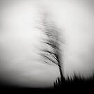 shadow dancer by Dorit Fuhg