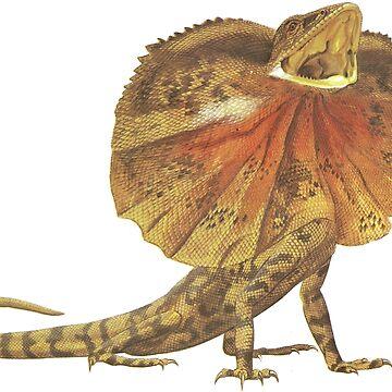 Frilled Lizard - Chlamydosaurus kingii by staticnomad