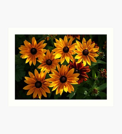 Orange Daisies Art Print