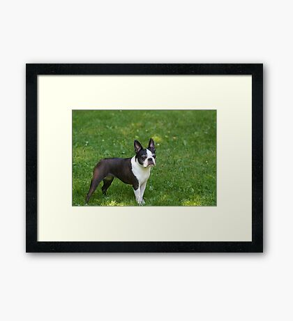 Luci at 7 Framed Print