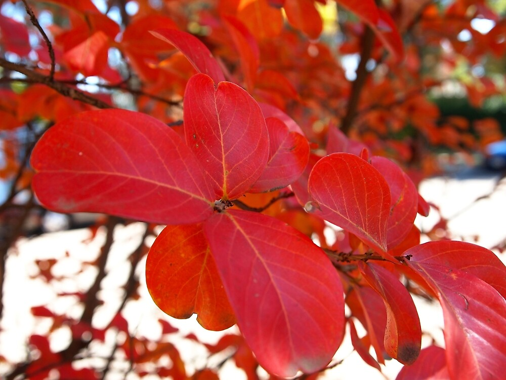 Red Leaves in Autumn 2 by Douglas E.  Welch
