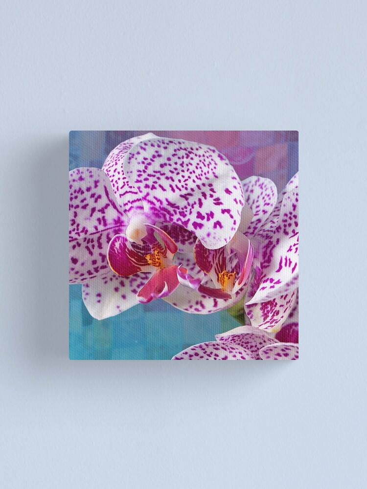 Alternate view of Phalaenopsis orchid with patchwork Canvas Print