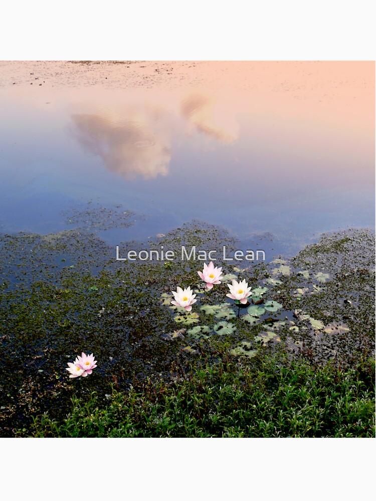 Lily Pond by yallmia