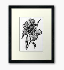 Single flower of Iris graphic illustartion Framed Print