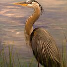 Great Blue Heron by Rich Summers