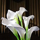 Peace Lillies by EtiKat