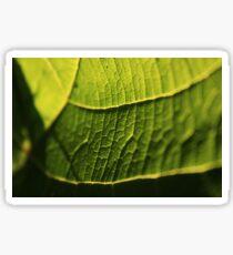 Illuminated Leaf - Nature Photography Sticker