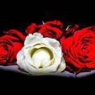 Red and White Roses by Avril Harris