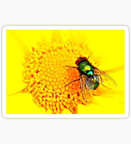 Green Bottle Fly on Yellow Flower Sticker