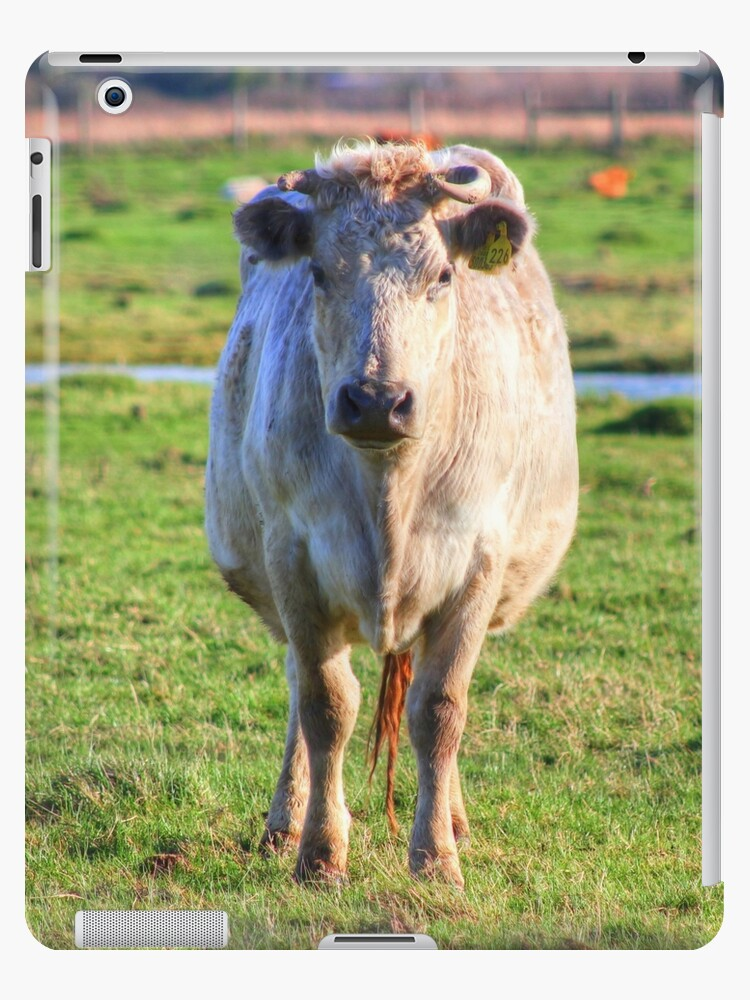 It's a Cow by Vicki Spindler (VHS Photography)