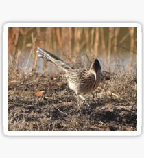 Roadrunner on the Hunt Sticker