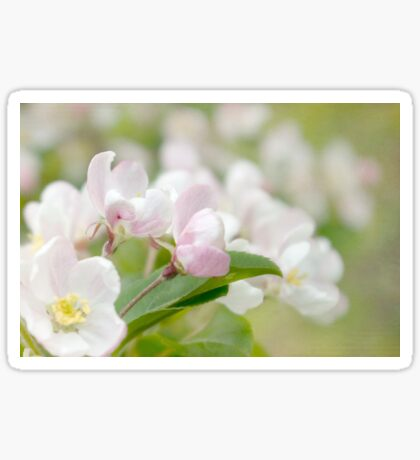 Soft freshness of apple blossom Sticker