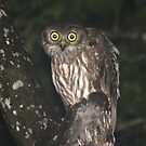 Barking Owl by Keith McGuinness